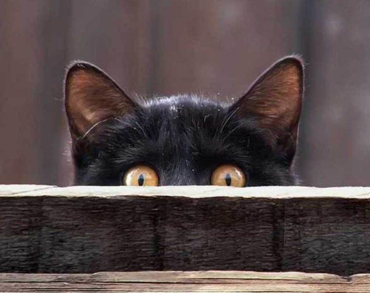curiosità-generale-